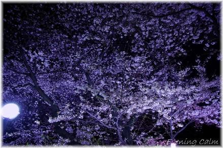 Chidorigahuchi_2009007