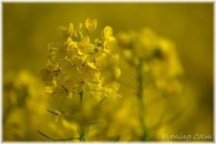 Gongendoututumi_2009005