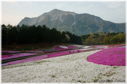 Hitujiyama_park_2009001