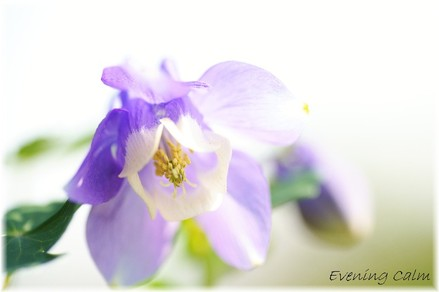 Odamaki_2009001
