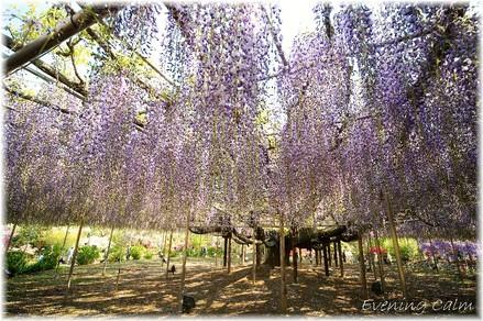 Flowerpark_2009001