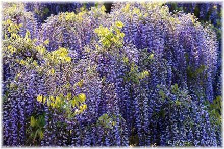Flowerpark_2009003