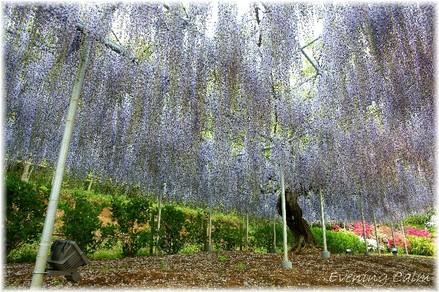 Flowerpark_2009007