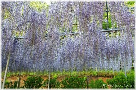 Flowerpark_2009008
