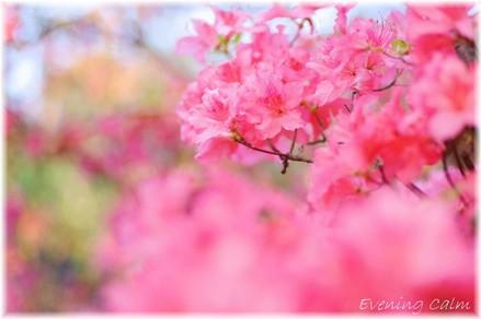 Tutuji_2009008