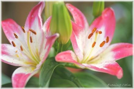 Sukasiyuri_2009003