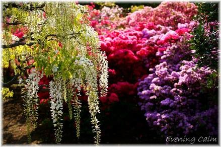 Flowerpark_2009005
