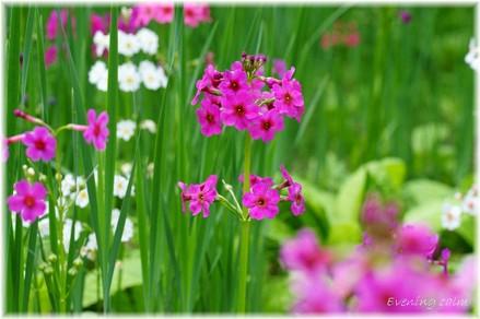 Kurinsou_2009006