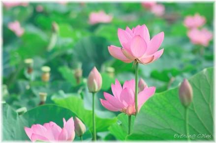 P_kodaihasu_2009004