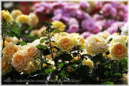 Honey_bouquet_2007001