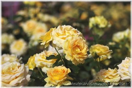 Honey_bouquet_2007002