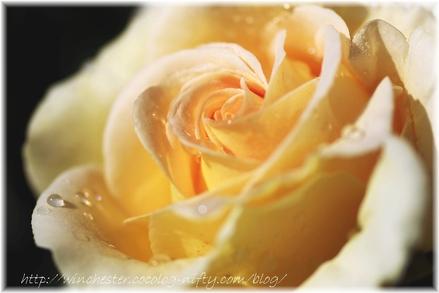Honey_bouquet_2007003