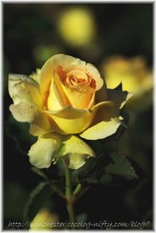 Honey_bouquet_2007004