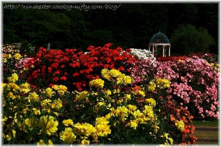 Keisei_rose_garden_2007003