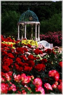 Keisei_rose_garden_2007006