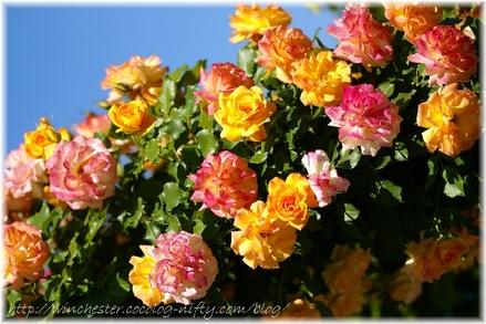 Kesei_rose_garden_2007002
